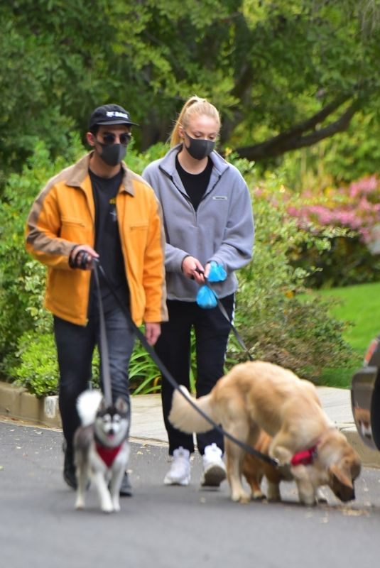 Sophie Turner Take her three dogs out for a walk this afternoon wearing black masks in Los Angeles