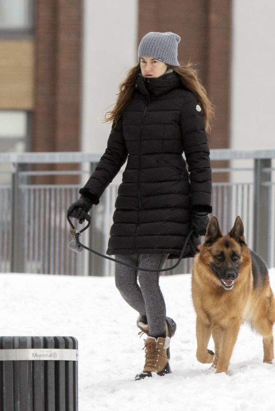 Shailene Woodley Spotted walking her dog in Montreal
